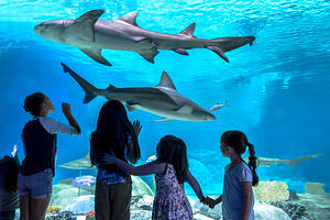 Things to do in Scottsdale with Kids