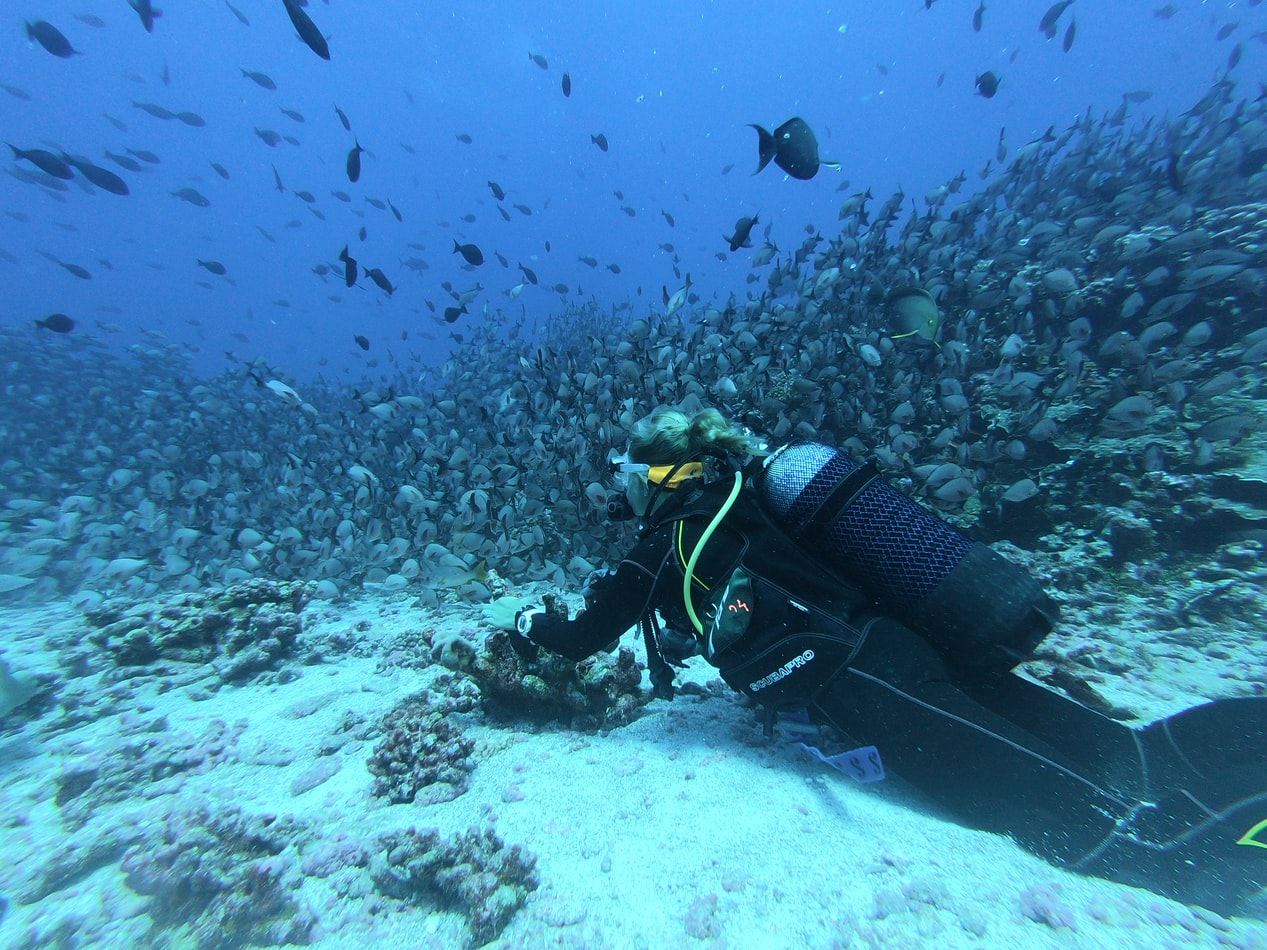 Person scuba diving in clearwater beach
